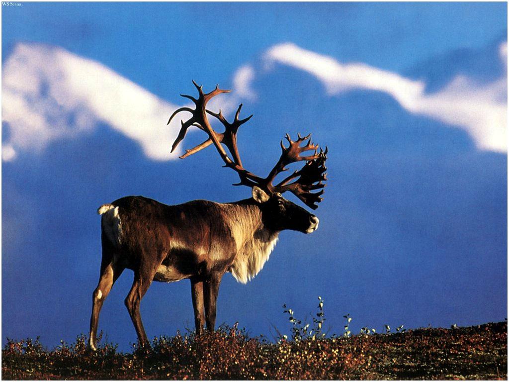 Moose? Deer? Frozen Solid In Place [PIC] : Reddit.com